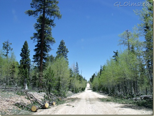 Trees bucked off road along FR610 S Kaibab National Forest Arizona
