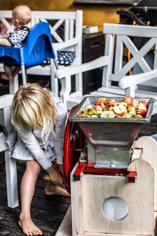 Alba knuser æbler - Brødrene Bækgaard laver æblemost - Mikkel Bækgaards Madblog