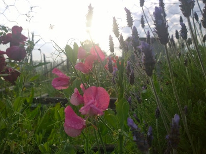 my garden oct 2014 (13)