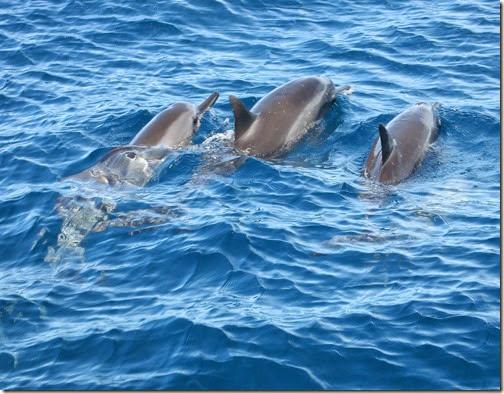 Dolphins, Napali Coast