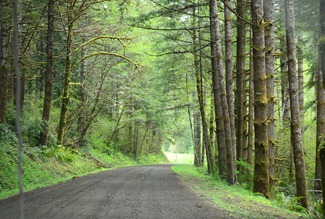 the road up to Deadwood Creek is narrow