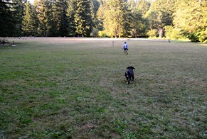 the dog exercise area is leash free
