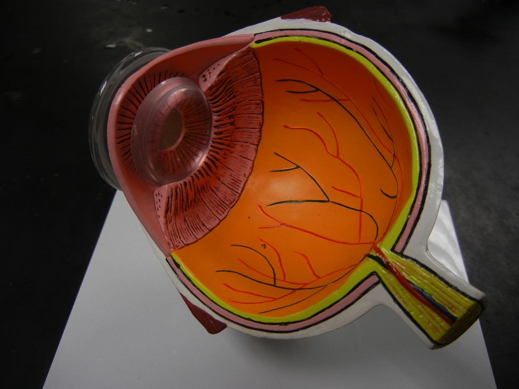Z Model Eye
