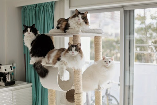 cats2015