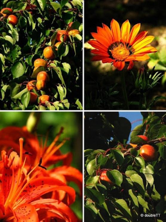 marelice-cvijece - collage-1