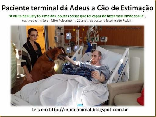 Paciente terminal dá Adeus a Cão de Estimação