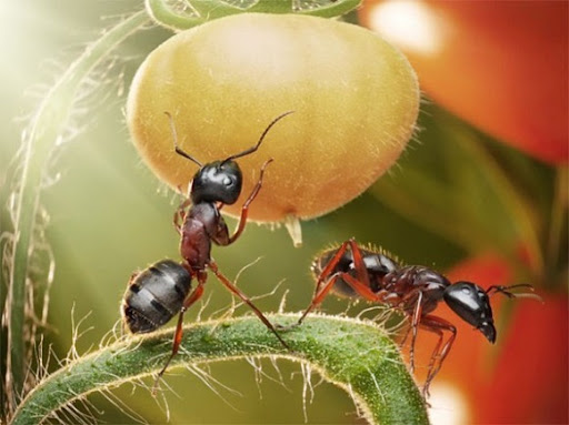 Life-of-Ants-Andrey-Pavlov-11