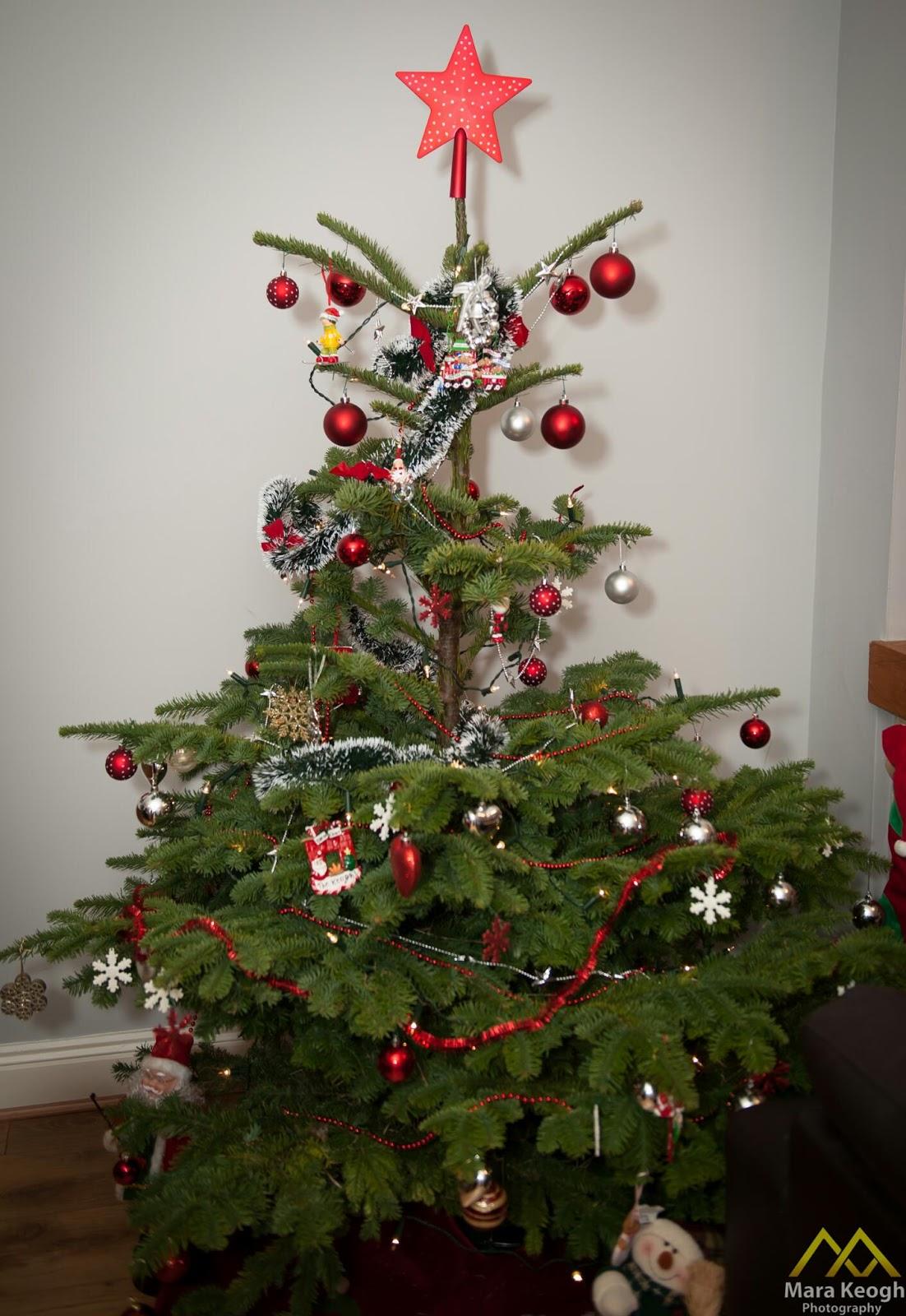 árvore De Natal De Verdade