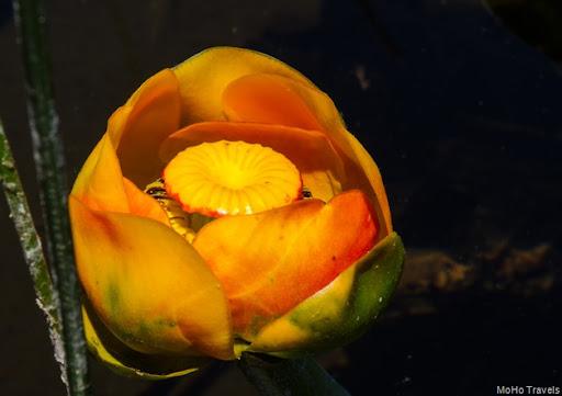 Crystal Spring_061
