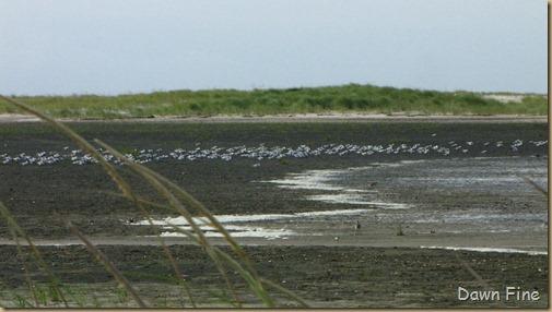 birding south beach_016