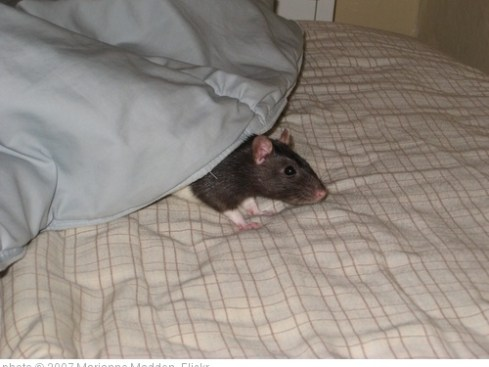 'Charlie on bed' photo (c) 2007, Marianne Madden - license: http://creativecommons.org/licenses/by-sa/2.0/
