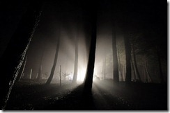 वीरान जंगल