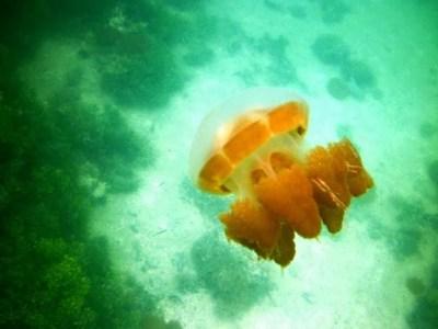 Atol Purba Pulau Kakaban ~ Farizan's Blog
