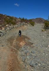 the desert 1_040DSC_0040