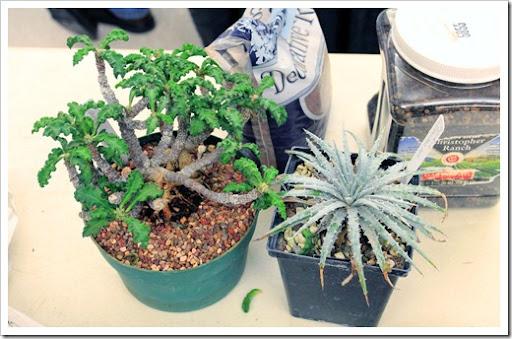 Lowes Nursery Pots