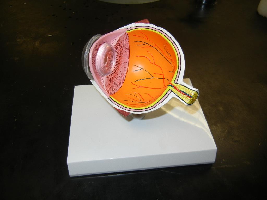 Z Model Eye 02
