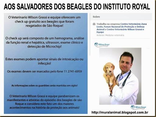 veterinario-beagles