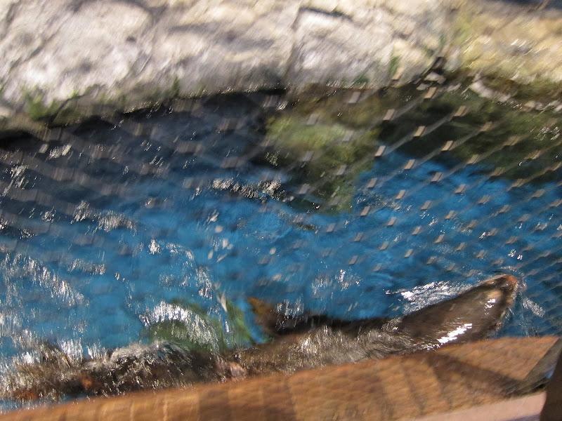 Tom's Blog: 芝加哥紐約報告探親之旅 Day5 之 雪德水族館與晚宴