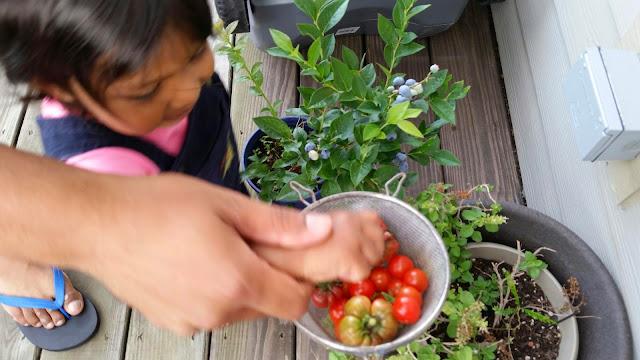 Asha and Devang Gardening