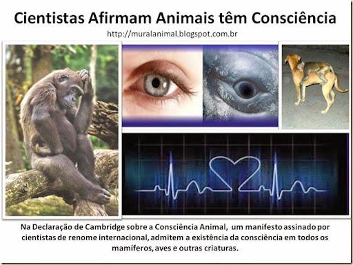 Cientistas Afirmam Animais têm Consciência