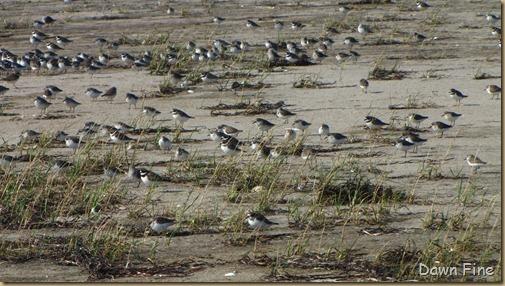 Birding south beach_095