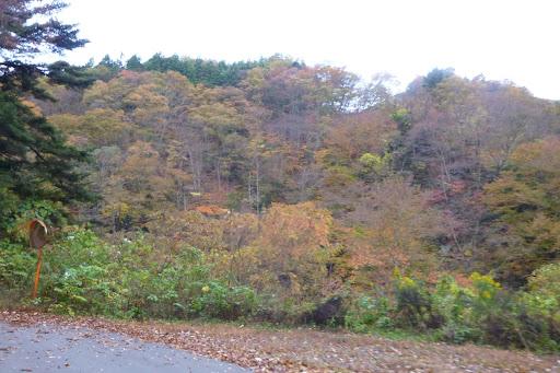 寒くなりきってないので紅葉が進んでいない様子。でも枯れてはいるので、余り今年はきれいに色づきませんね。