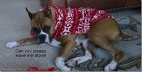 Christmas Fleece Dog Sweater Tutorial - Four Generations ...