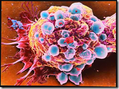 thalidomide cure cancer