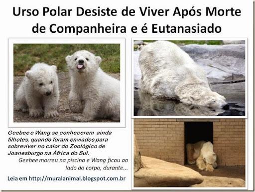 Urso Polar Desiste de Viver Após Morte