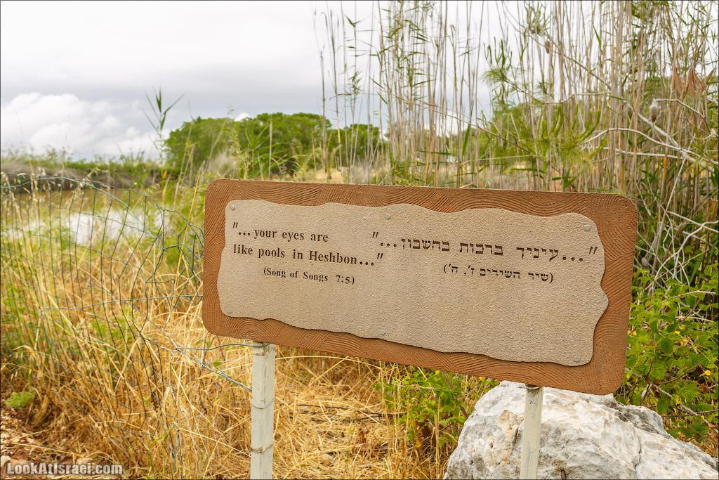 Неот Кдумим - Заповедник библейской природы | נאות קדומים