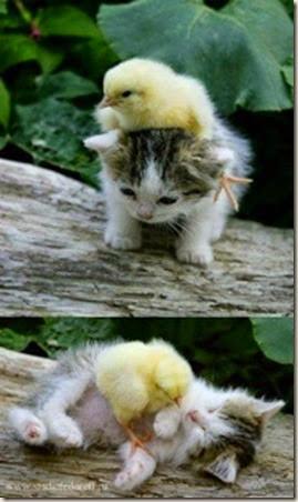 z kitten and duck
