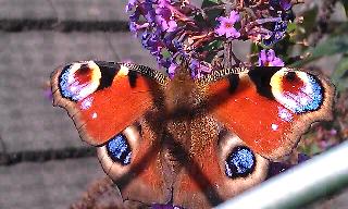 Alice Sagar FAD Art Blog Butterflies