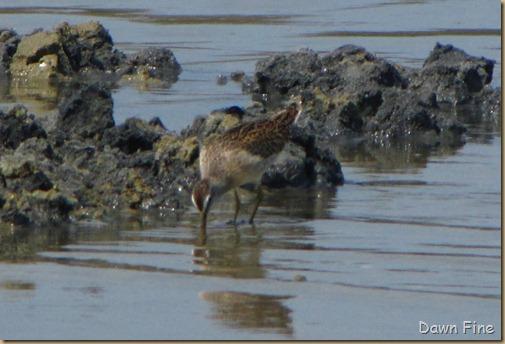 Birding Clamming_012