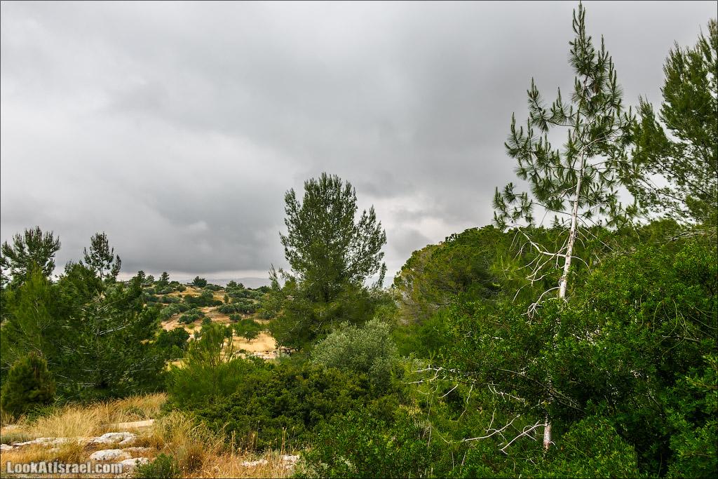Неот Кдумим - Заповедник библейской природы   נאות קדומים