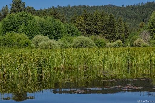 native sedges in the marsh