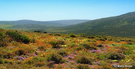 Namaqualand-flores-0