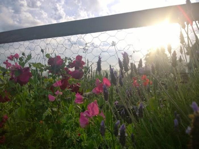 my garden oct 2014 (8)