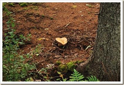 mushroom 15 (2)