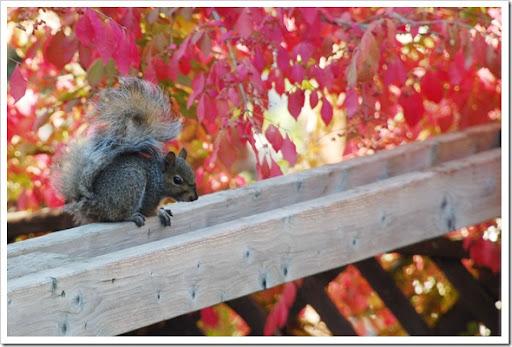 Squirrel Fence