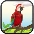 /Real-Talking-Parrot-para-PC-gratis,1539496/