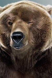 How To Draw Bear Animal screenshot 0