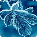 /APK_Winter-Wallpapers_PC,12356017.html