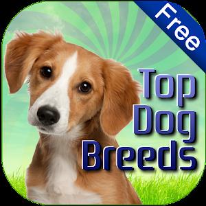 Dog Breeds Easy Pet Finder