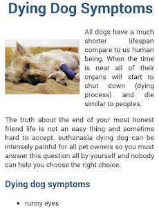 Dog Symptoms Cure screenshot 14