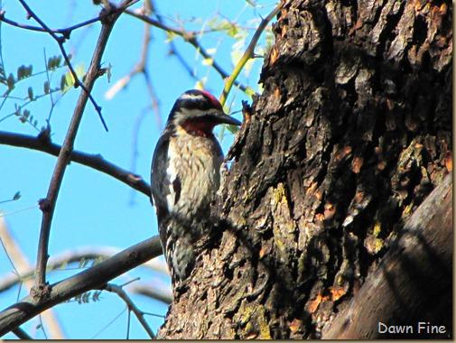 bird walk catalina state park_008