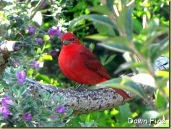 big sit birds_029