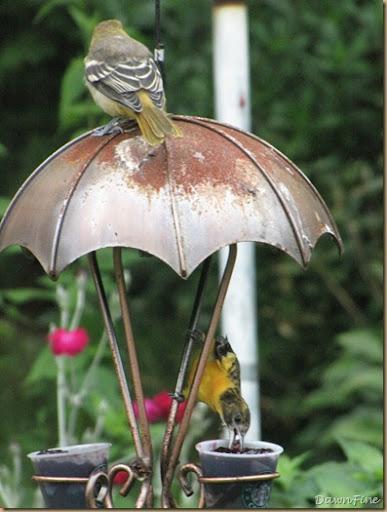 birds at feeder_20090623_006