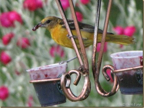birds at feeder_20090624_034