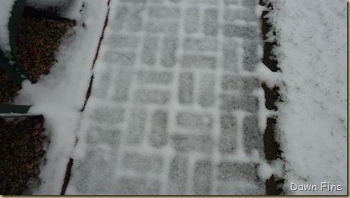 Snow _001