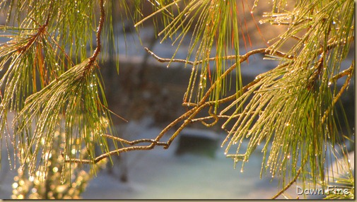 snow and ice_009